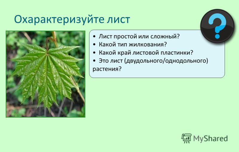 Лист простой или сложный? Какой тип жилкования? Какой край листовой пластинки? Это лист (двудольного/однодольного) растения? Охарактеризуйте лист