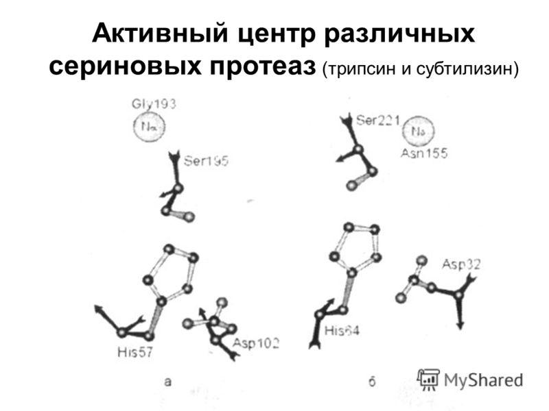 Активный центр различных сериновых протеаз (трипсин и субтилизин)