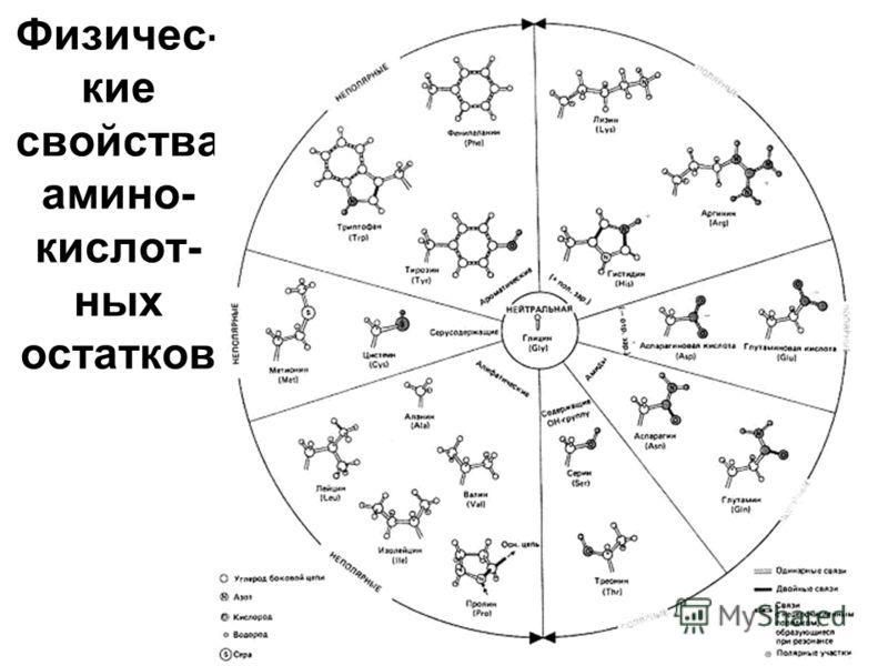 Физичес- кие свойства амино- кислот- ных остатков