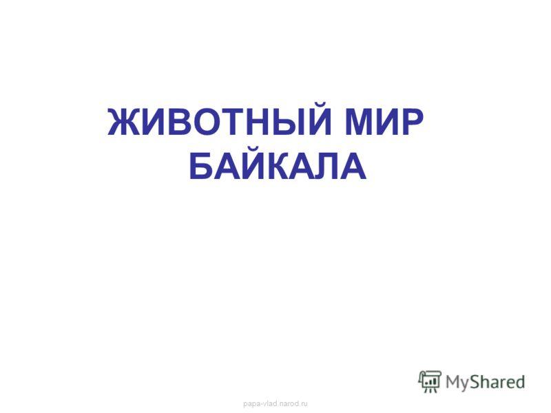 ЖИВОТНЫЙ МИР БАЙКАЛА Животный мир байкала papa-vlad.narod.ru