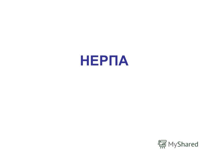 НЕРПА Нерпа