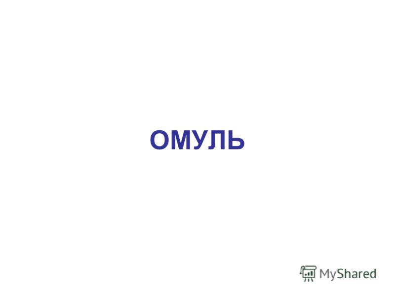 ОМУЛЬ Омуль