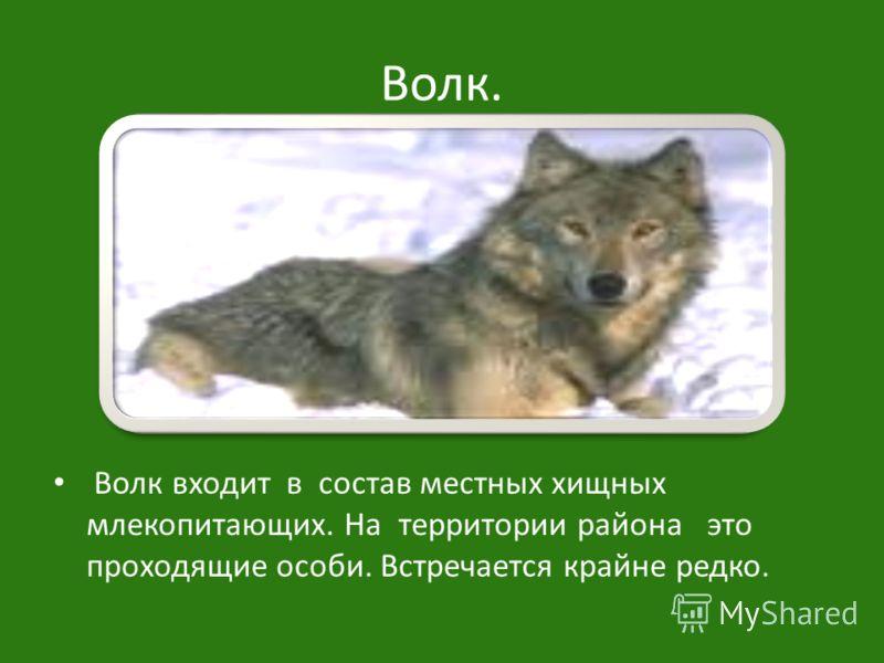 Волк. Волк входит в состав местных хищных млекопитающих. На территории района это проходящие особи. Встречается крайне редко.