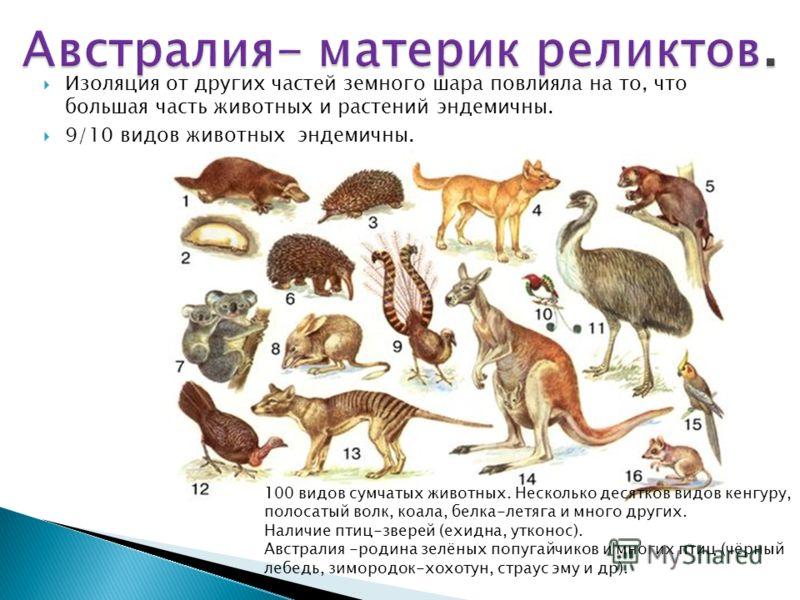 Изоляция от других частей земного шара повлияла на то, что большая часть животных и растений эндемичны. 9/10 видов животных эндемичны. 100 видов сумчатых животных. Несколько десятков видов кенгуру, полосатый волк, коала, белка-летяга и много других.