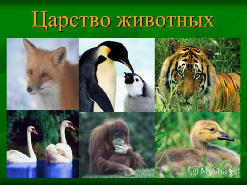 Картинки природа животные рыбы птицы