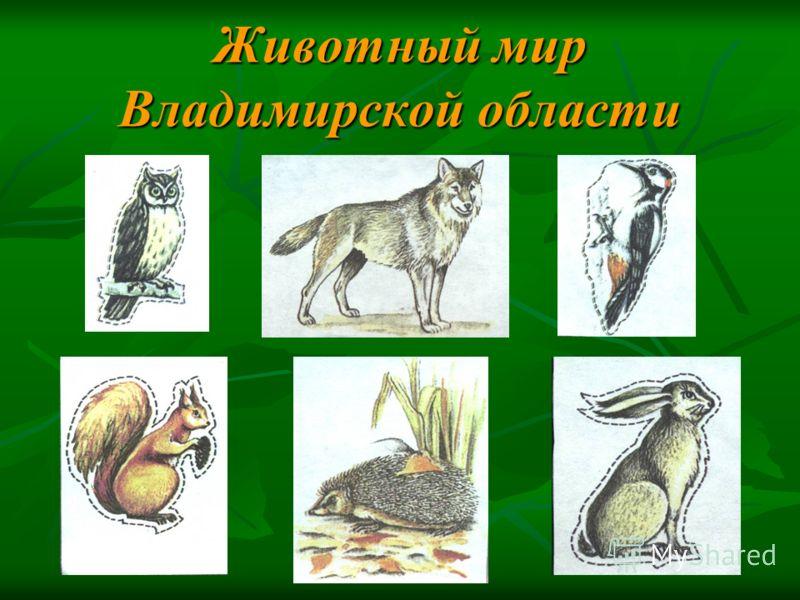 Животный мир Владимирской области