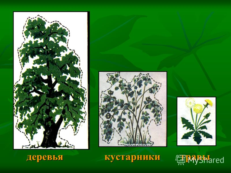 деревья кустарники травы деревья кустарники травы