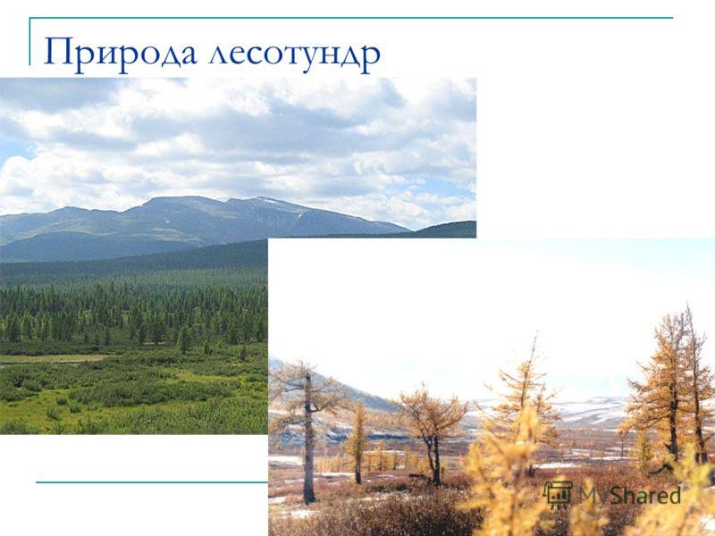 Природа лесотундр