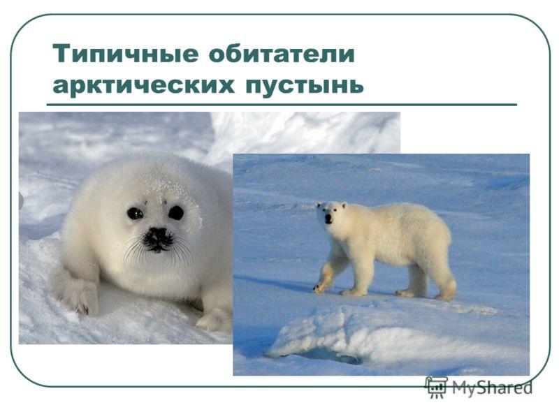 Типичные обитатели арктических пустынь