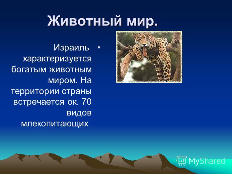 Животный мир. Израиль характеризуется богатым животным миром. На территории страны встречается ок. 70 видов млекопитающих