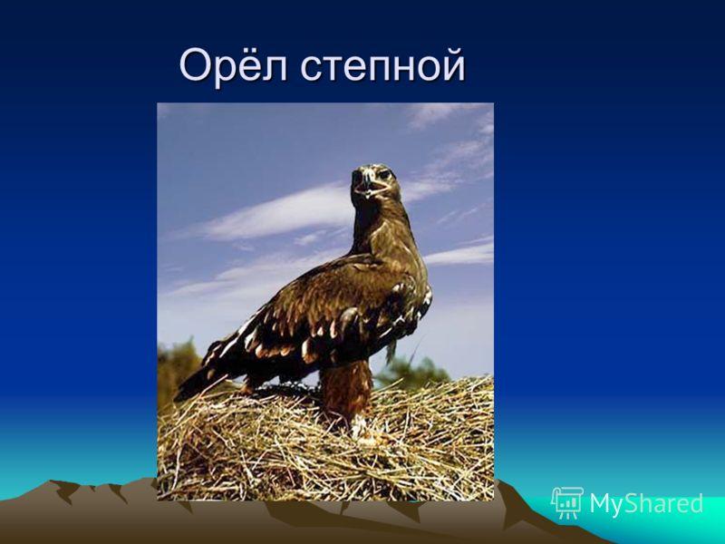 Орёл степной