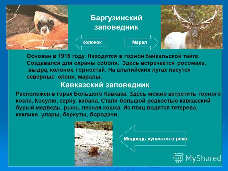 Основан в 1916 году. Находится в горной байкальской тайге. Создавался для охраны соболя. Здесь встречается росомаха, выдра, колонок, горностай. На альпийских лугах пасутся северные олени, маралы. Баргузинский заповедник КолонокМарал Кавказский запове