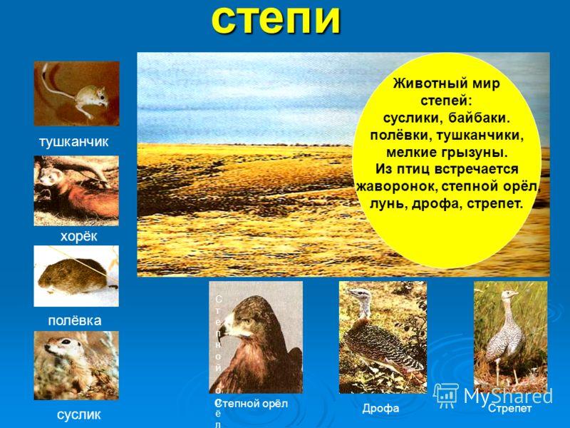 Животный мир степей: суслики, байбаки. полёвки, тушканчики, мелкие грызуны. Из птиц встречается жаворонок, степной орёл, лунь, дрофа, стрепет.степи тушканчик хорёк полёвка суслик Степной орёлСтепной орёл Степной орёл ДрофаСтрепет
