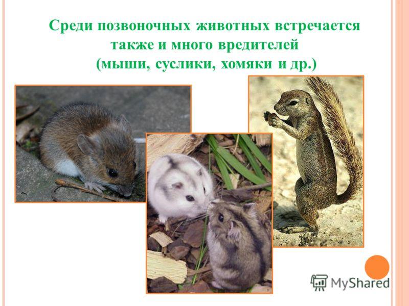 Среди позвоночных животных встречается также и много вредителей (мыши, суслики, хомяки и др.)