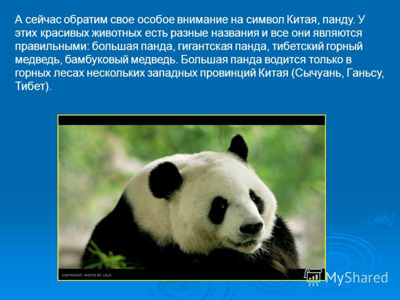 А сейчас обратим свое особое внимание на символ Китая, панду. У этих красивых животных есть разные названия и все они являются правильными: большая панда, гигантская панда, тибетский горный медведь, бамбуковый медведь. Большая панда водится только в