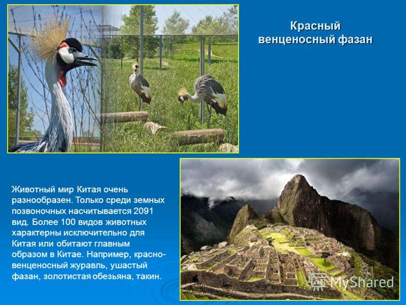 Животный мир Китая очень разнообразен. Только среди земных позвоночных насчитывается 2091 вид. Более 100 видов животных характерны исключительно для Китая или обитают главным образом в Китае. Например, красно- венценосный журавль, ушастый фазан, золо