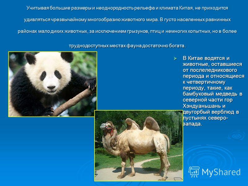 В Китае водятся и животные, оставшиеся от послеледникового периода и относящиеся к четвертичному периоду, такие, как бамбуковый медведь в северной части гор Хэндуаньшань и двугорбый верблюд в пустынях северо- запада. В Китае водятся и животные, остав