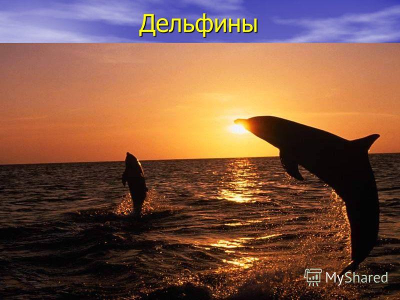 Дельфины Дельфины