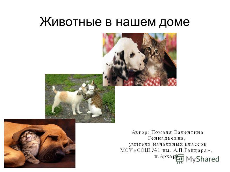 Животные в нашем доме