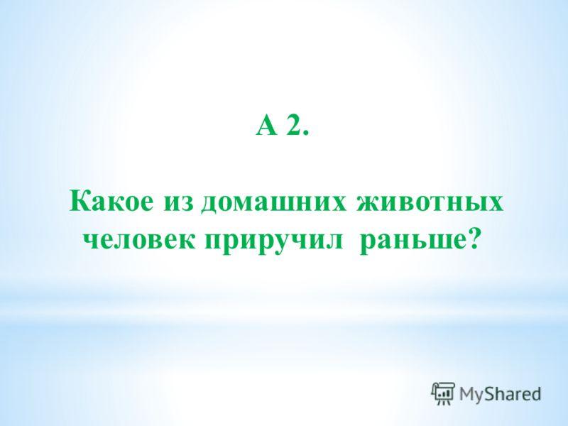 А 2. Какое из домашних животных человек приручил раньше?