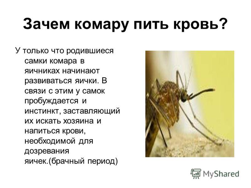 Зачем комару пить кровь? Кровь пьют самки комаров.()БЕЛКИ?() Самцы же питаются цветочным нектаром и соками растений.(УГЛЕВОДЫ?)