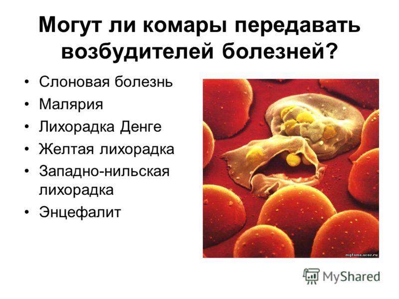 Чем опасен комариный укус? Выраженные аллергические реакции вплоть до анафилактического шока после Расчесанные укусы нагнаиваются советуют не прихлопывать комаров на себе, а стряхивать или сбивать щелчкам, организме комаров содержатся опасные для чел