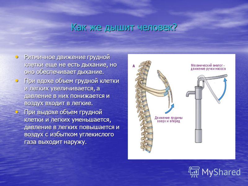Как же дышит человек? Ритмичное движение грудной клетки еще не есть дыхание, но оно обеспечивает дыхание. Ритмичное движение грудной клетки еще не есть дыхание, но оно обеспечивает дыхание. При вдохе объем грудной клетки и легких увеличивается, а дав