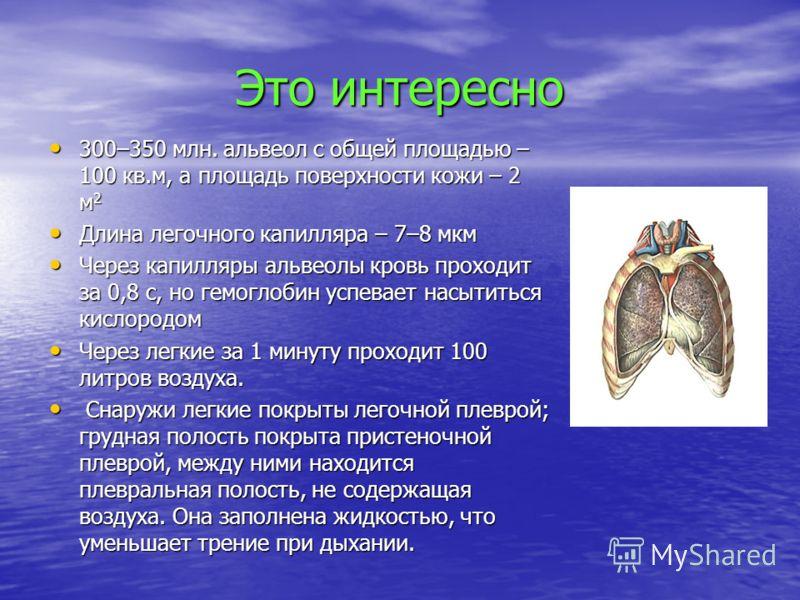 Это интересно 300–350 млн. альвеол с общей площадью – 100 кв.м, а площадь поверхности кожи – 2 м 2 300–350 млн. альвеол с общей площадью – 100 кв.м, а площадь поверхности кожи – 2 м 2 Длина легочного капилляра – 7–8 мкм Длина легочного капилляра – 7–