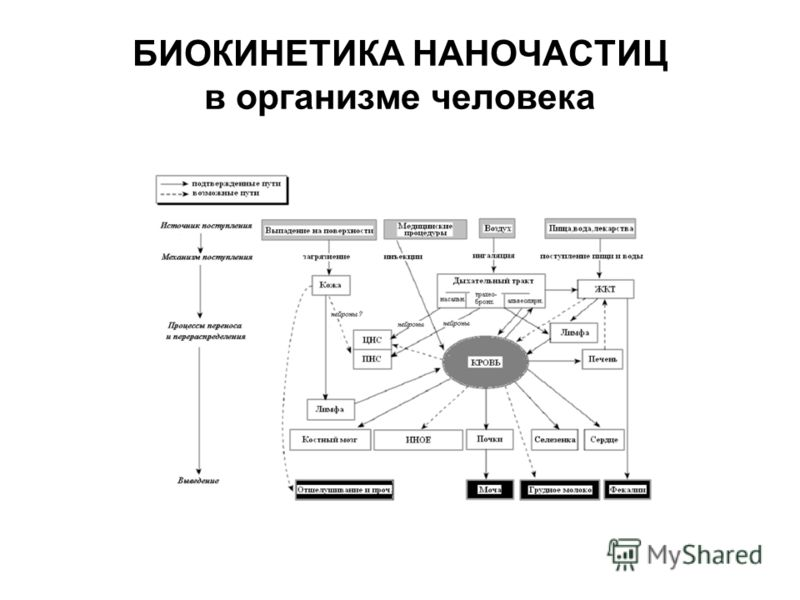 БИОКИНЕТИКА НАНОЧАСТИЦ в организме человека