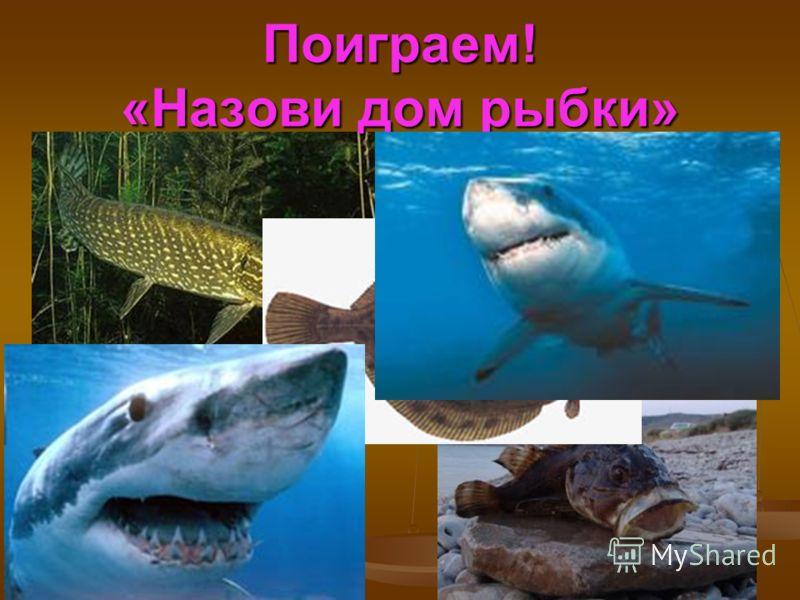 Поиграем! «Назови дом рыбки»