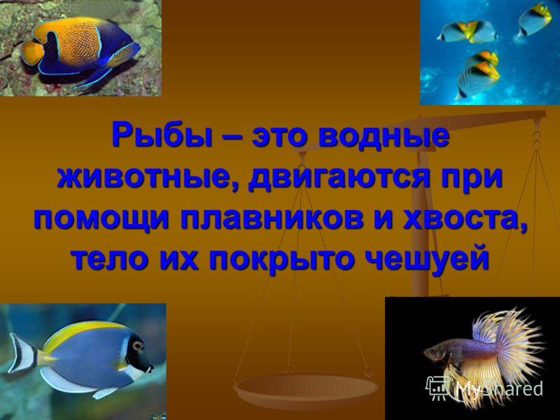 Рыбы – это водные животные, двигаются при помощи плавников и хвоста, тело их покрыто чешуей