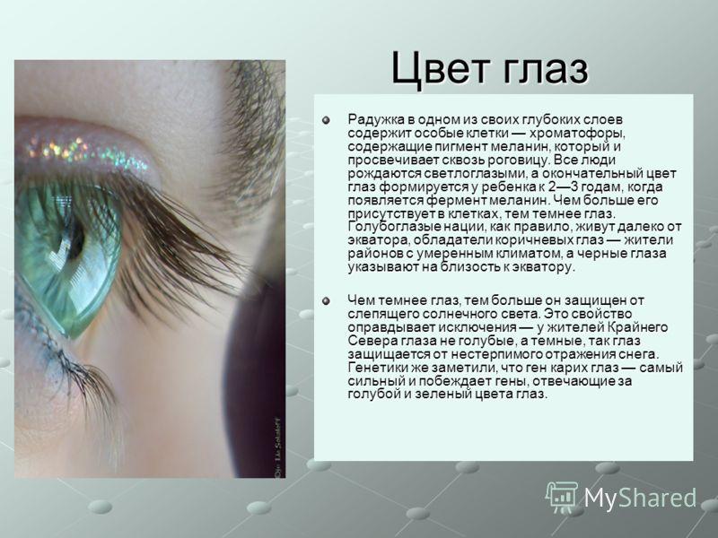 Цвет глаз Радужка в одном из своих глубоких слоев содержит особые клетки хроматофоры, содержащие пигмент меланин, который и просвечивает сквозь роговицу. Все люди рождаются светлоглазыми, а окончательный цвет глаз формируется у ребенка к 23 годам, ко