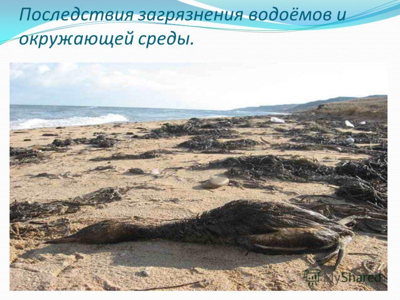 Последствия загрязнения водоёмов и окружающей среды.