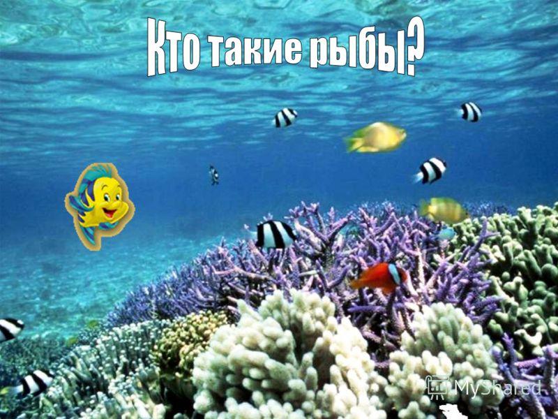 Рыбы водные животные тело которых у