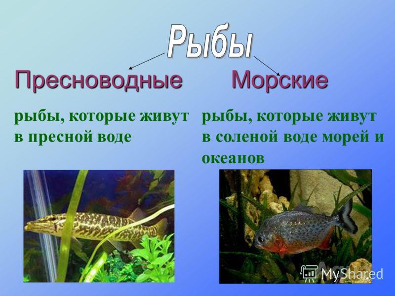 Пресноводные рыбы, которые живут в пресной воде Морские рыбы, которые живут в соленой воде морей и океанов