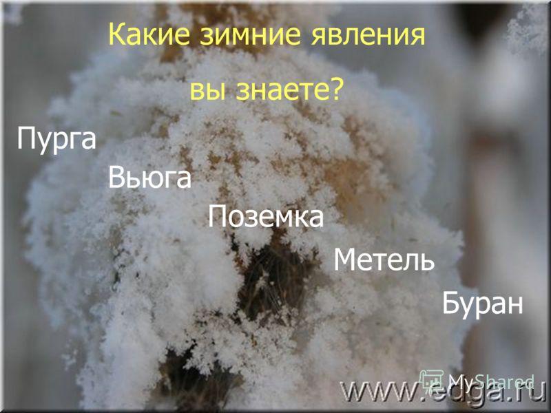 Какие зимние явления вы знаете? Пурга Вьюга Поземка Метель Буран
