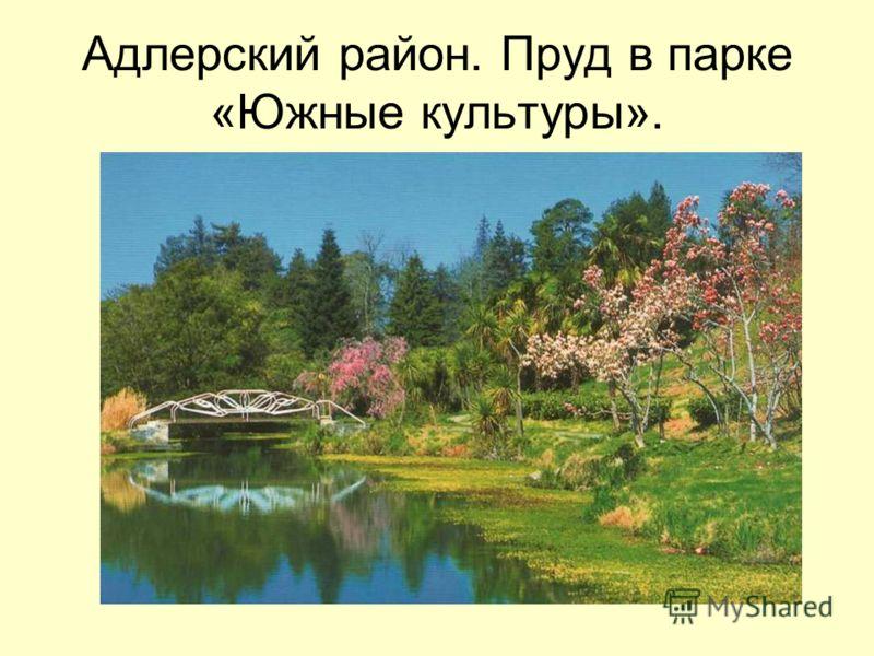 Адлерский район. Пруд в парке «Южные культуры».