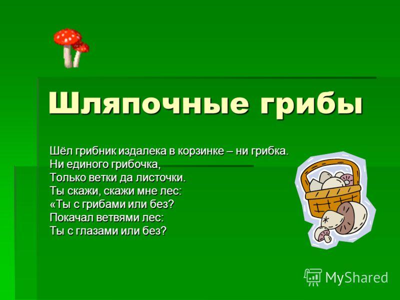Шляпочные грибы Шёл грибник издалека в корзинке – ни грибка. Ни единого грибочка, Только ветки да листочки. Ты скажи, скажи мне лес: «Ты с грибами или без? Покачал ветвями лес: Ты с глазами или без?