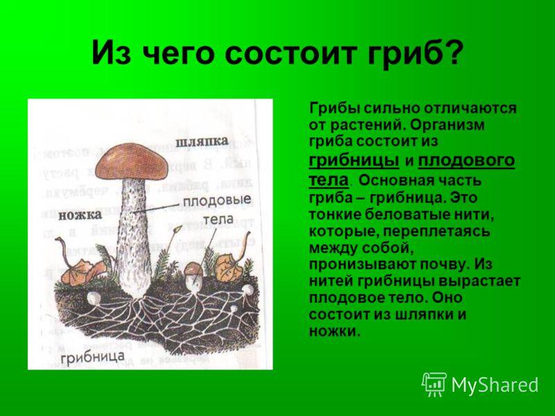 Из чего состоит гриб? Грибы сильно отличаются от растений. Организм гриба состоит из грибницы и плодового тела. Основная часть гриба – грибница. Это тонкие беловатые нити, которые, переплетаясь между собой, пронизывают почву. Из нитей грибницы выраст