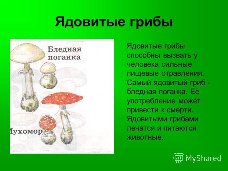 Ядовитые грибы Ядовитые грибы способны вызвать у человека сильные пищевые отравления. Самый ядовитый гриб - бледная поганка. Её употребление может привести к смерти. Ядовитыми грибами лечатся и питаются животные.