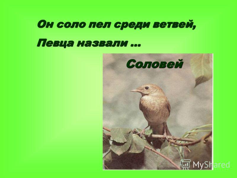 Он соло пел среди ветвей, Певца назвали … Соловей