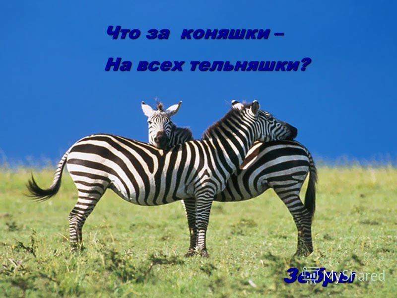 Что за коняшки – На всех тельняшки? Зебры