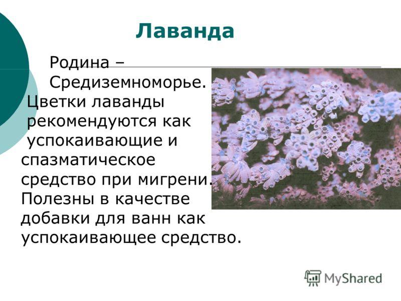 Лаванда Родина – Средиземноморье. Цветки лаванды рекомендуются как успокаивающие и спазматическое средство при мигрени. Полезны в качестве добавки для ванн как успокаивающее средство.