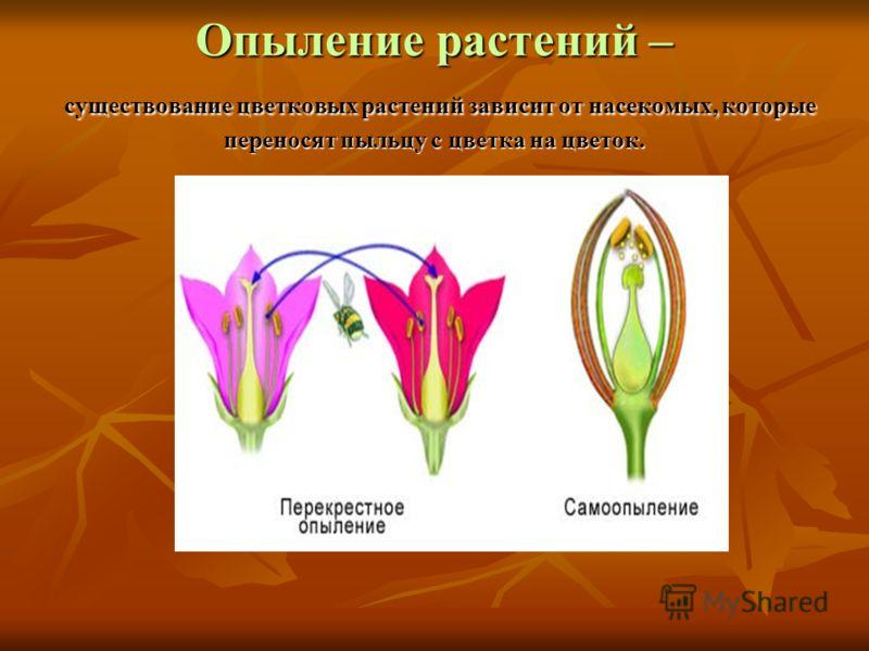 Опыление растений – существование цветковых растений зависит от насекомых, которые переносят пыльцу с цветка на цветок.