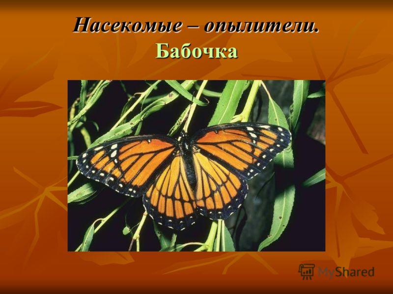 Насекомые – опылители. Бабочка