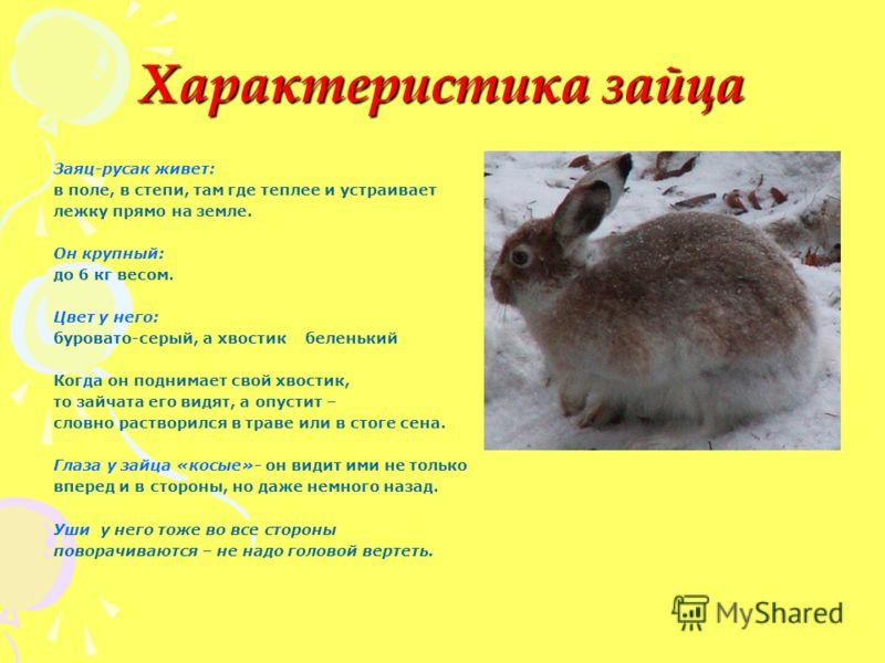 Характеристика зайца Заяц-русак живет: в поле, в степи, там где теплее и устраивает лежку прямо на земле. Он крупный: до 6 кг весом. Цвет у него: буровато-серый, а хвостик беленький Когда он поднимает свой хвостик, то зайчата его видят, а опустит – с