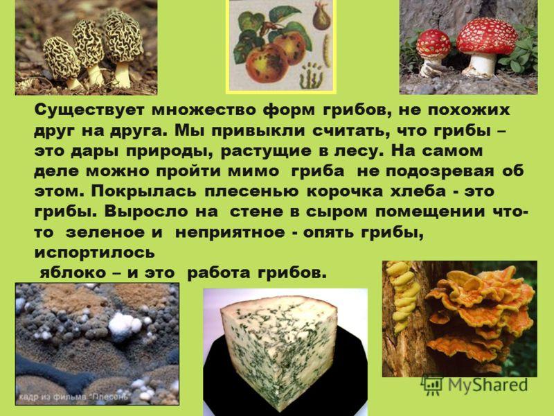 Существует множество форм грибов, не похожих друг на друга. Мы привыкли считать, что грибы – это дары природы, растущие в лесу. На самом деле можно пройти мимо гриба не подозревая об этом. Покрылась плесенью корочка хлеба - это грибы. Выросло на стен