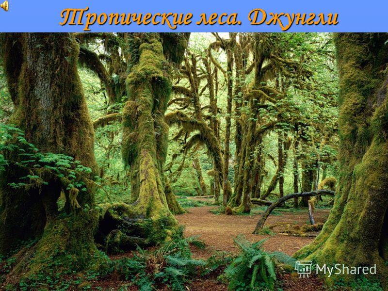 Тропические леса. Джунгли