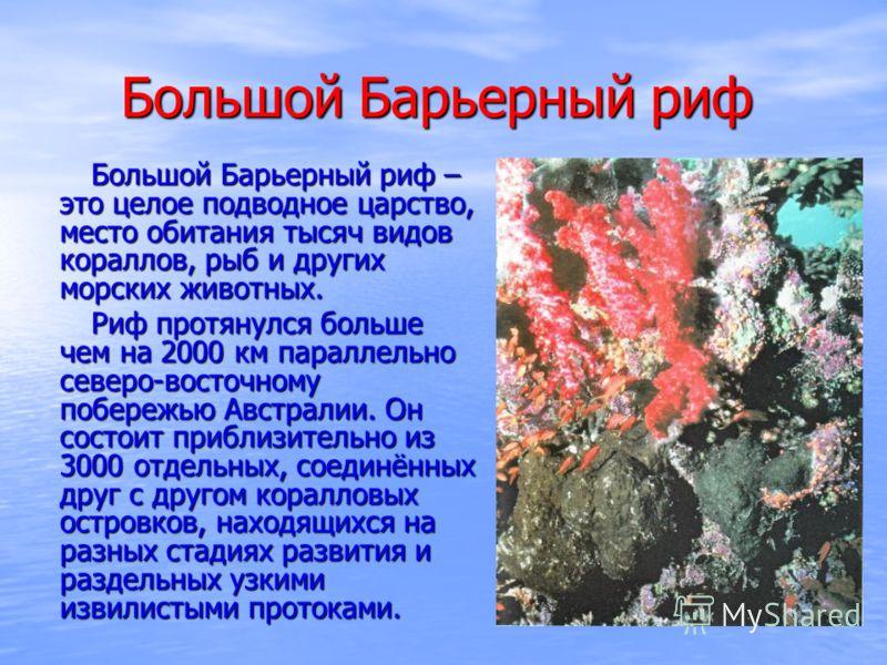 Большой Барьерный риф Большой Барьерный риф – это целое подводное царство, место обитания тысяч видов кораллов, рыб и других морских животных. Большой Барьерный риф – это целое подводное царство, место обитания тысяч видов кораллов, рыб и других морс