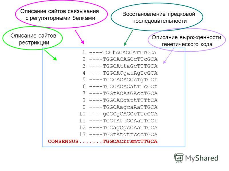 1 ----TGGtACAGCATTTGCA 2 ----TGGCACAGCcTTcGCA 3 ----TGGCAttaGcTTTGCA 4 ----TGGCACgatAgTcGCA 5 ----TGGCACAGGcTgTGCt 6 ----TGGCACAGatTTcGCt 7 ----TGGtACAaGAccTGCA 8 ----TGGCACgattTTTtCA 9 ----TGGCAagcaAaTTGCA 10 ----gGGCgCAGCcTTcGCA 11 ----TGGtAtcGCAaT